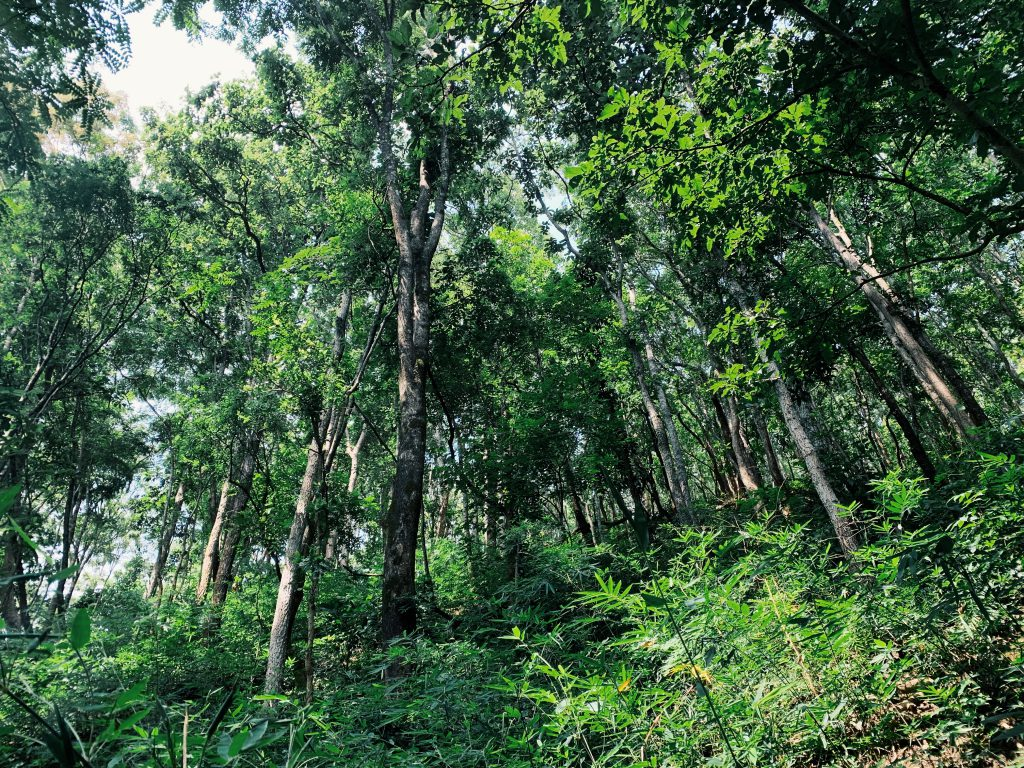Our permaculture farm in North Thailand is surrounded by lush forests and mountains.