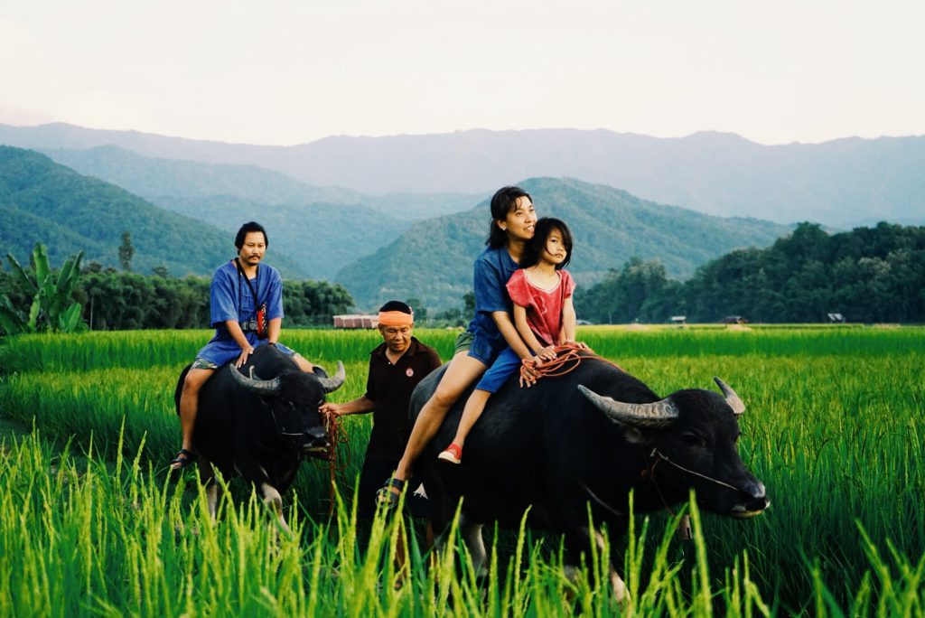 Ecotourism means visiting places where humans live in harmony with animals and nature like our farm.